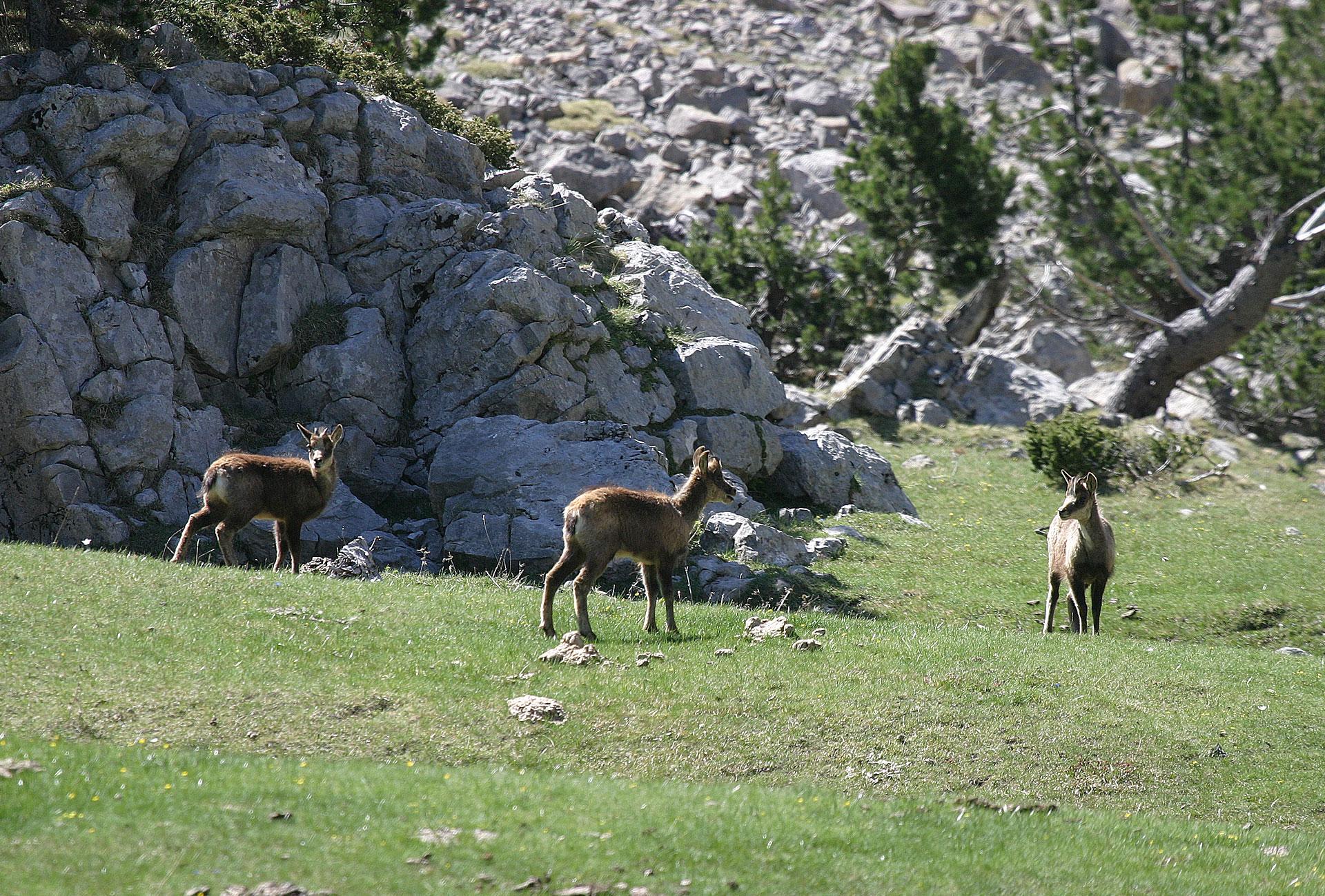 Turismo rural y de aventura en la naturaleza, hotel con encanto en Huesca, escapada para dos, rural tourism and adventure in nature, rural hotel with charm in pyrenees, romantic getaway